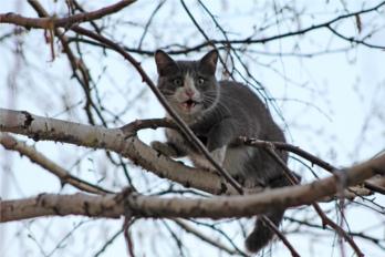 Кот застрял на дереве фото